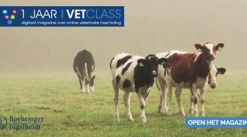 vetclass magazine ter ere van 1 jarig bestaan online nascholingsplatform dierenartsen