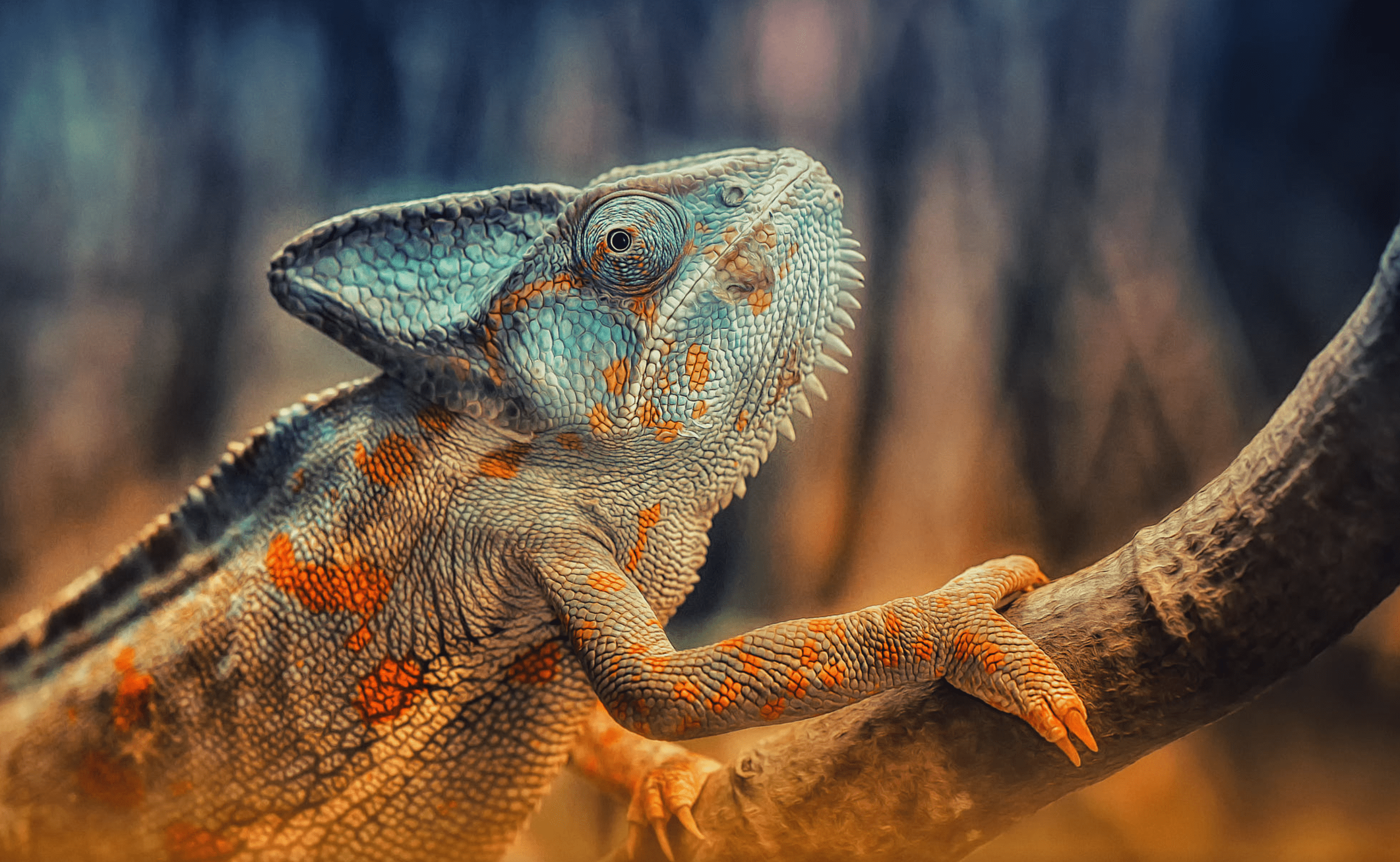 reptiles worlds most popular animals