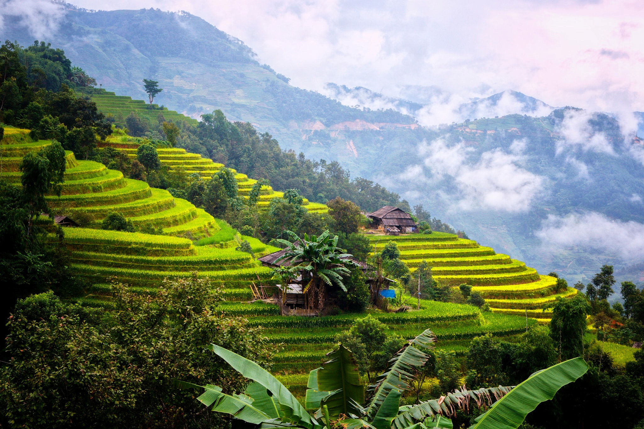 ha giang rice paddies in vietnam