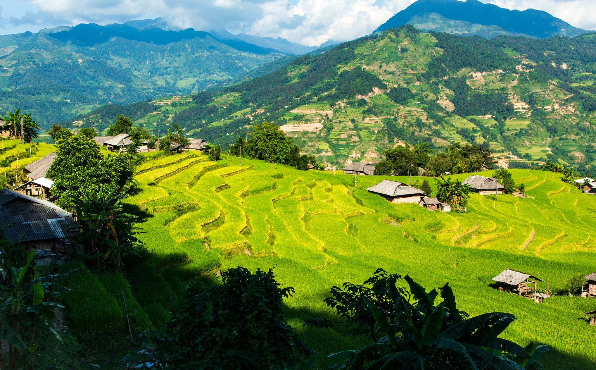 rice terraces in Hoàng Su Phì vietnam