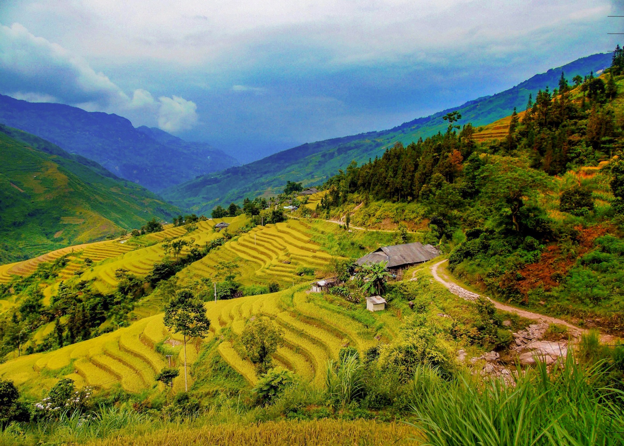 LÀO CAI rice terraces in vietnam with photos