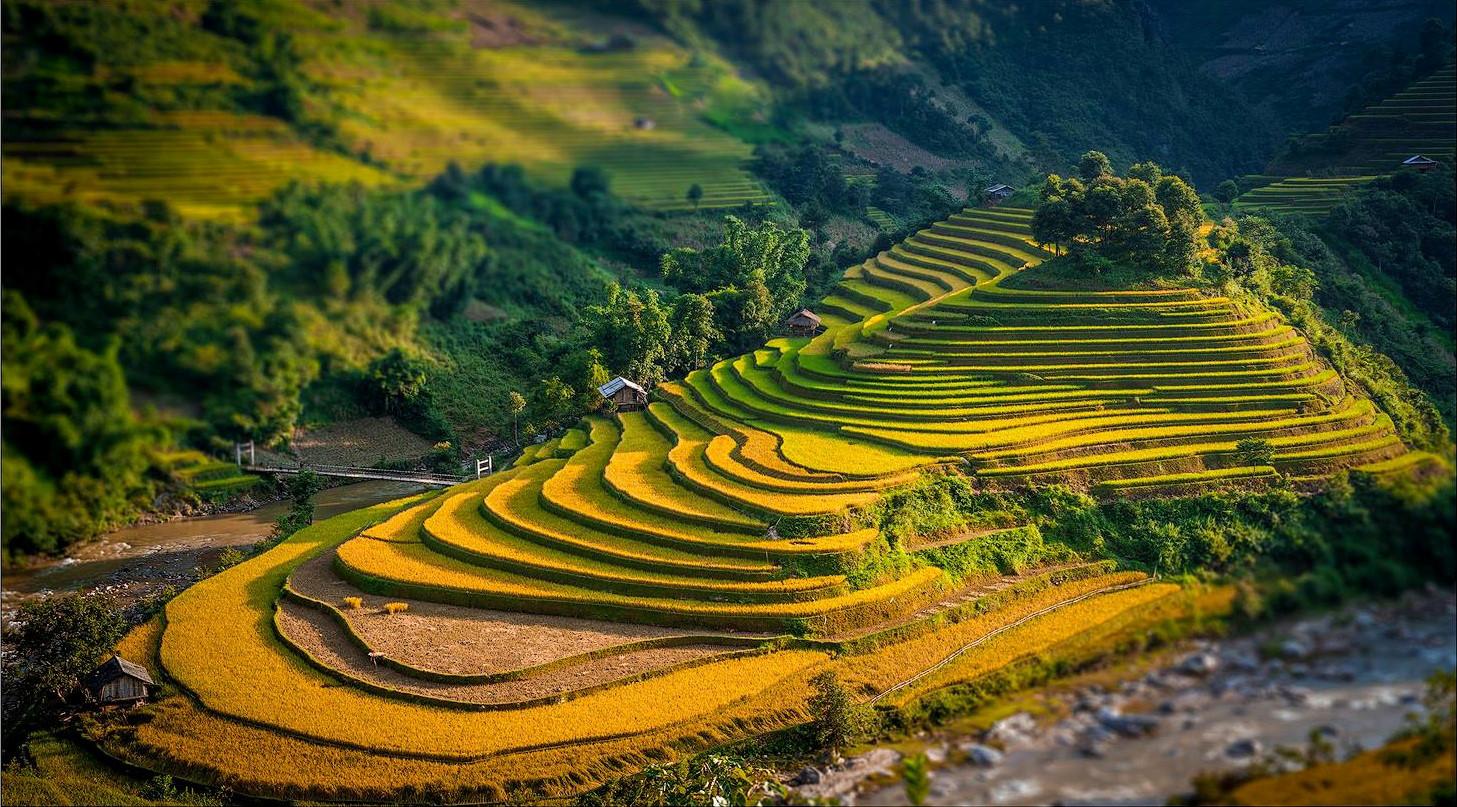 yen bai rice paddies