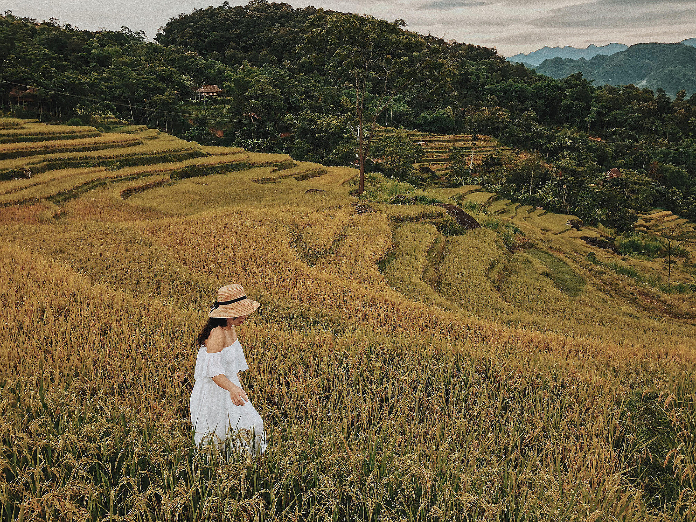 pu luong rice paddies vietnam pictures