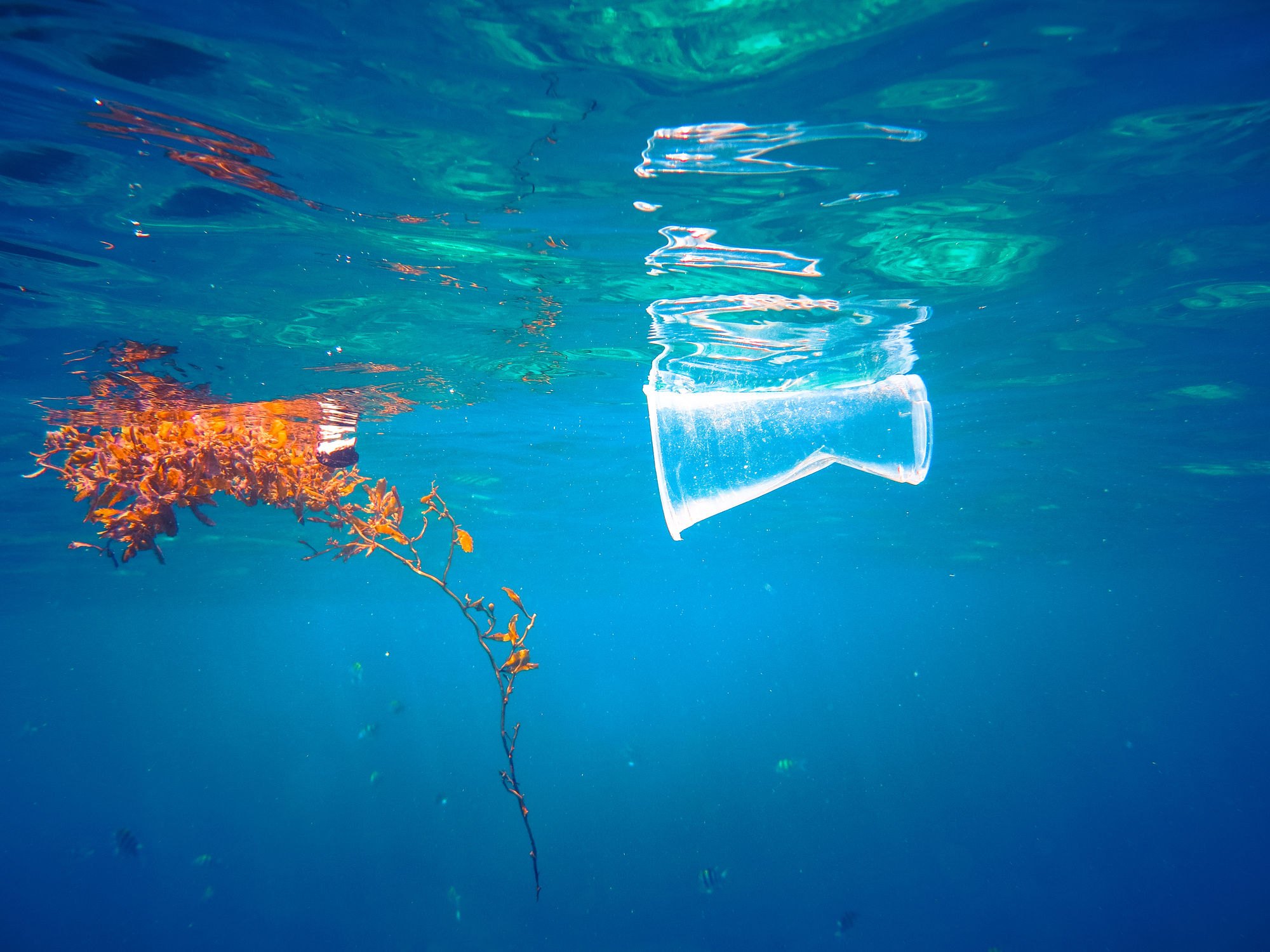 ocean, plastic pollution, ocean unite