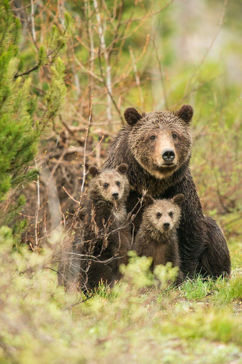 Virgin Unite, Conservation, Jamie Joseph, Bears, Mangelsen