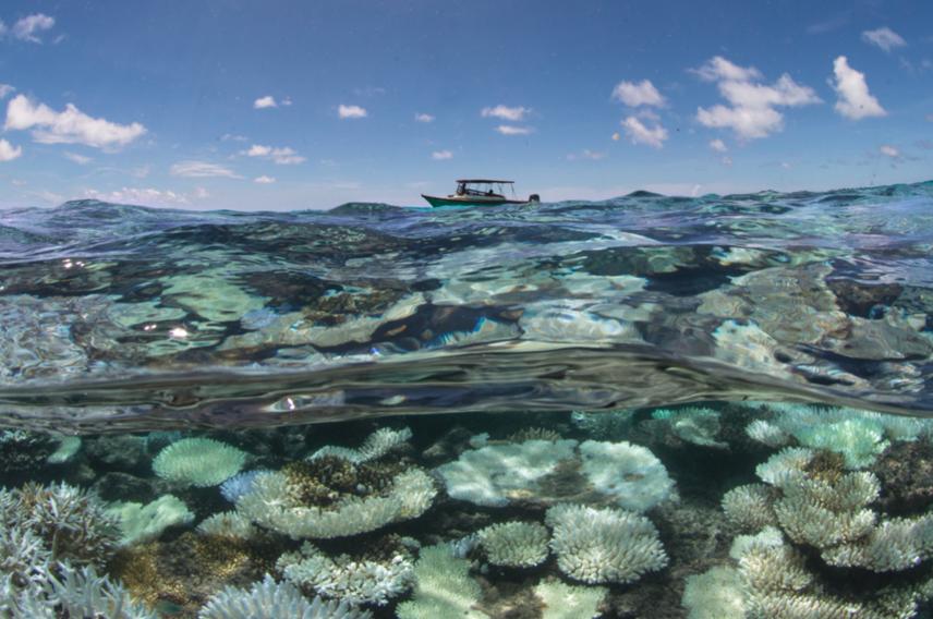 Virgin Unite, Ocean, Coral Reef