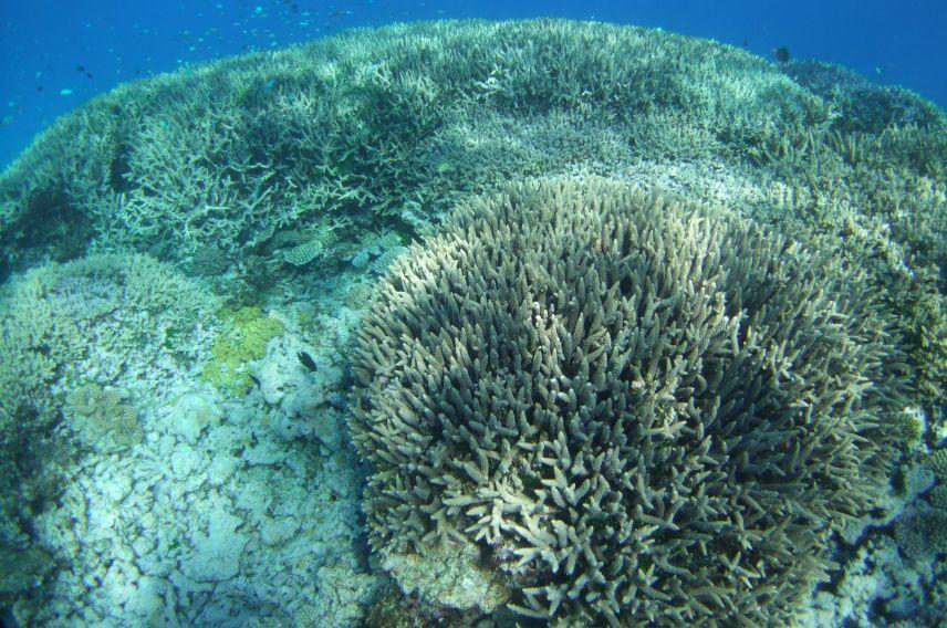 corals, ocean unite, dan laffoley, iucn