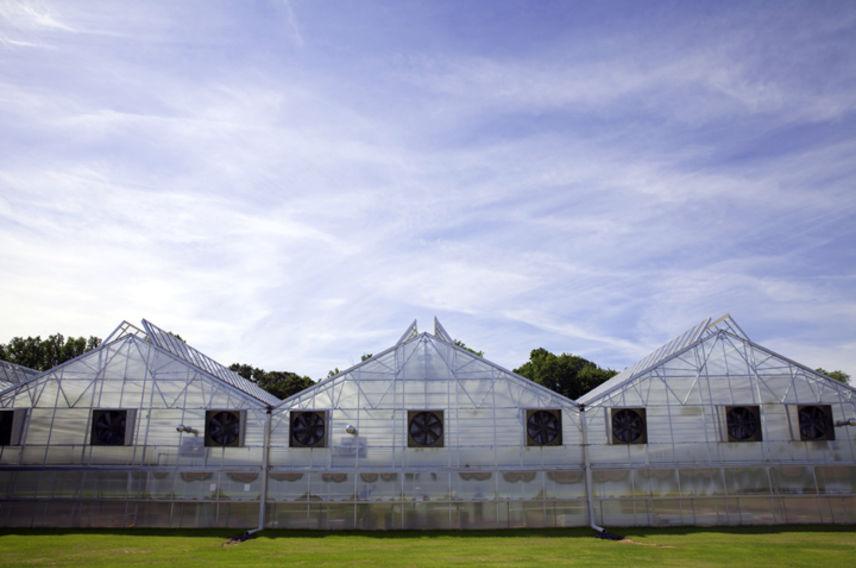 Virgin Unite, sustainability, sustainia, bright farms