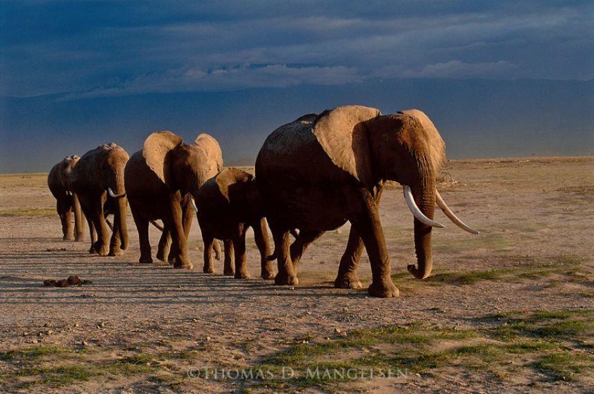 Virgin Unite, Animal Conservation, Elephants, Saving The Wild