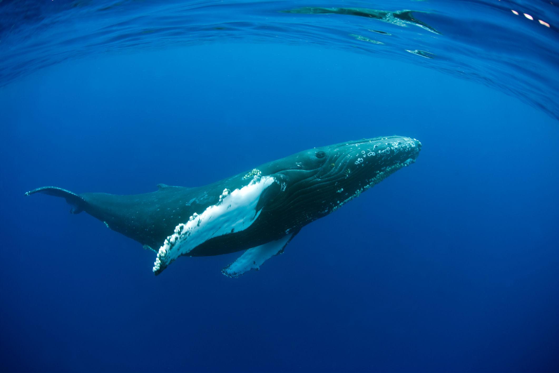 whales, fish, Ocean Unite, Ocean Conservation