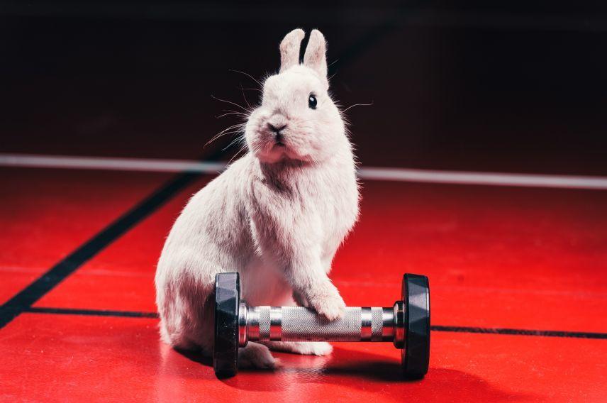 Virgin Active gym bunny