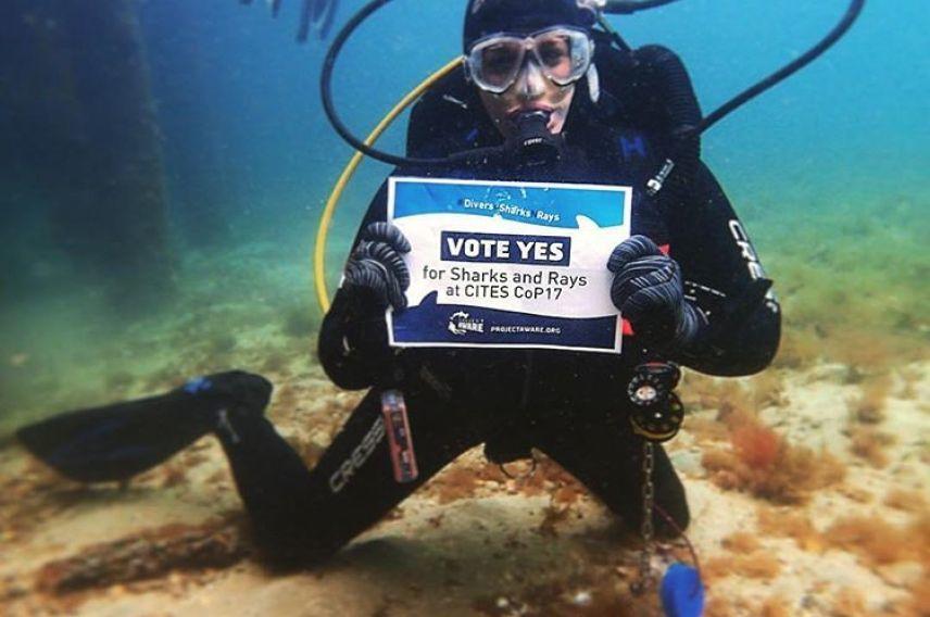 Virgin Unite, Oceans, Project Aware, Sharks, Rays