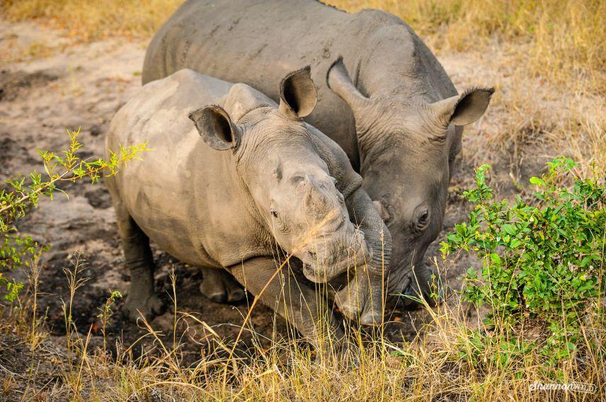 Virgin Unite, Conservation, Jamie Joseph, rhino