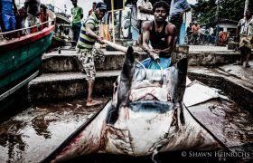 Virgin Unite, ocean conservation, shawn heinrichs, manta
