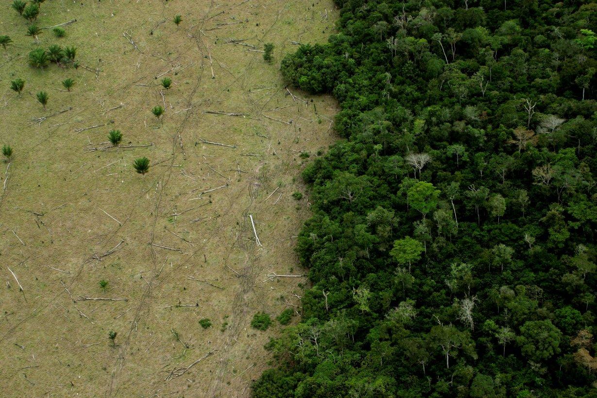 Brazil, deforestation and the Amazon rainforest | Virgin