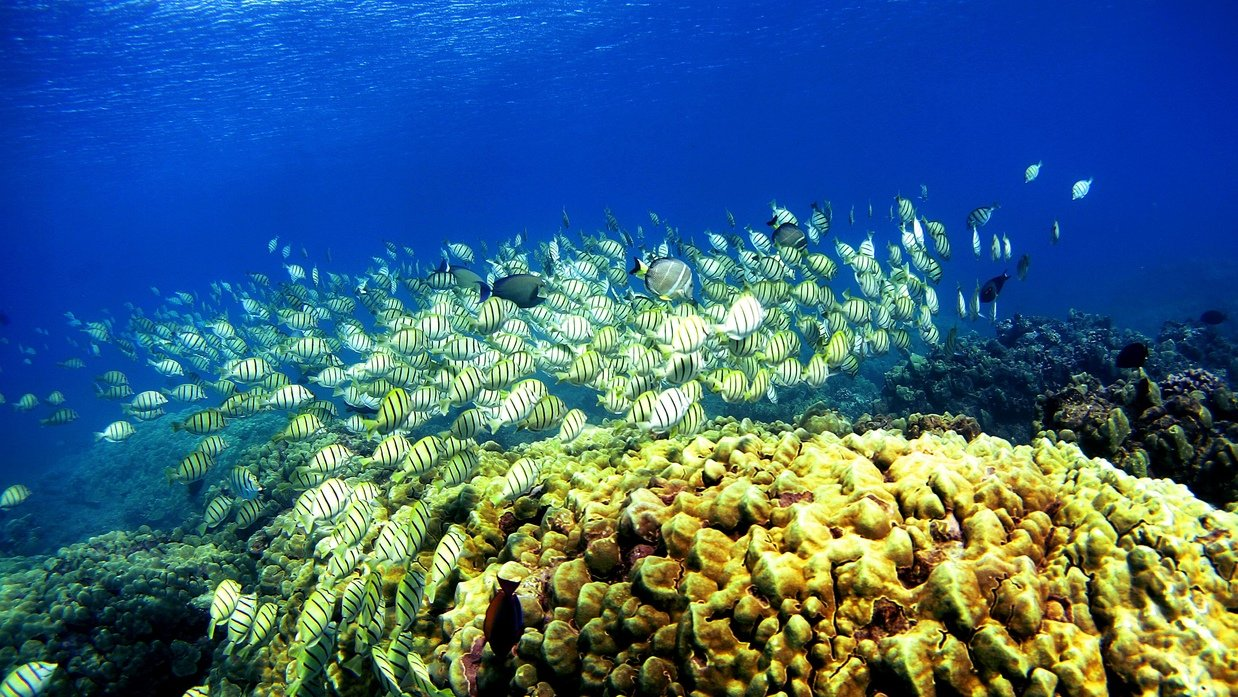 Coral reef in danger