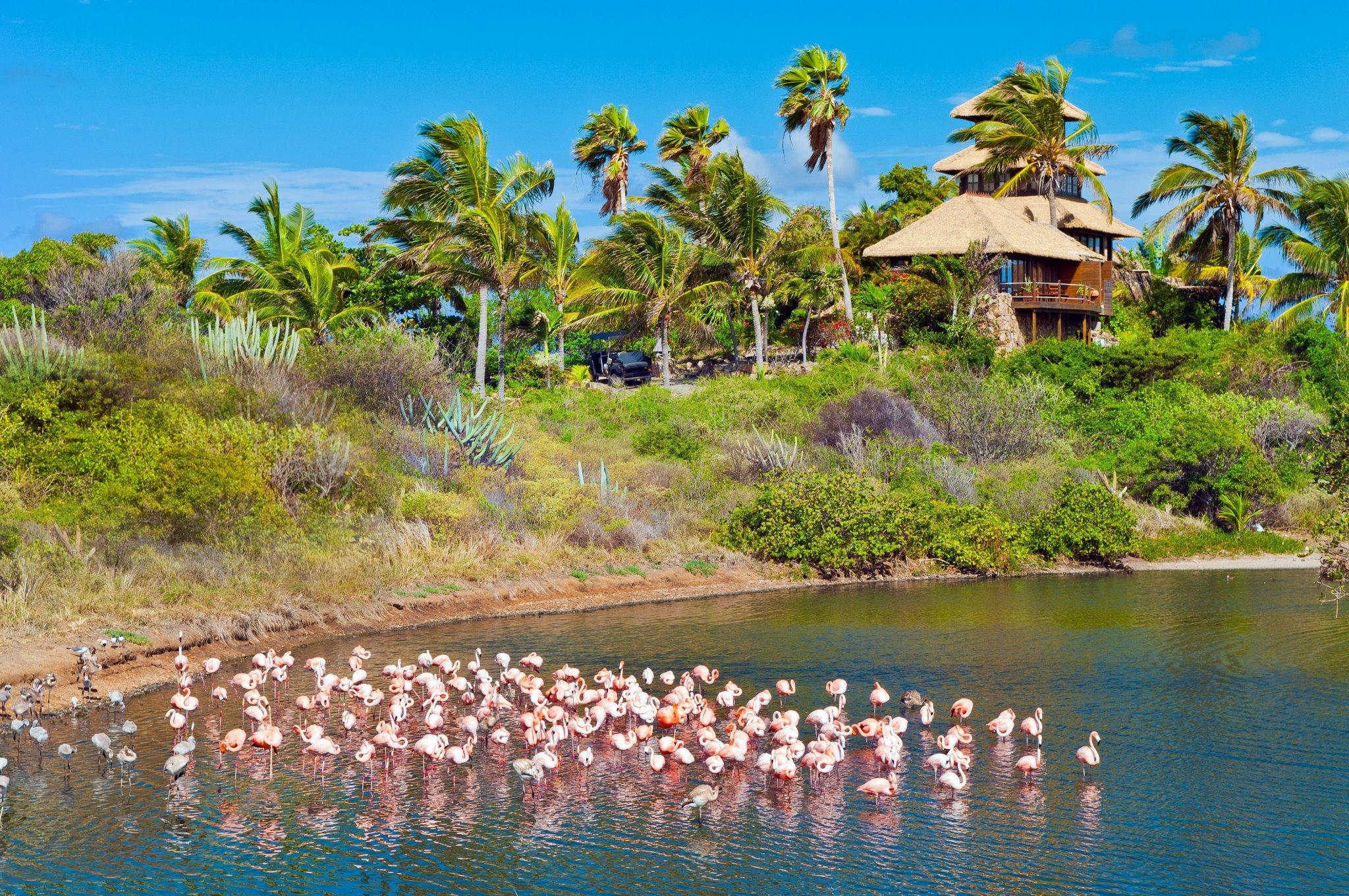 Necker flamingos