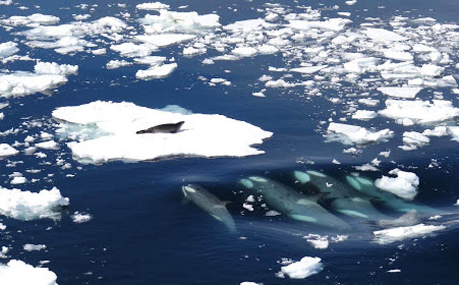 Virgin Unite, Ocean Unite, Lewis Pugh, Antarctic
