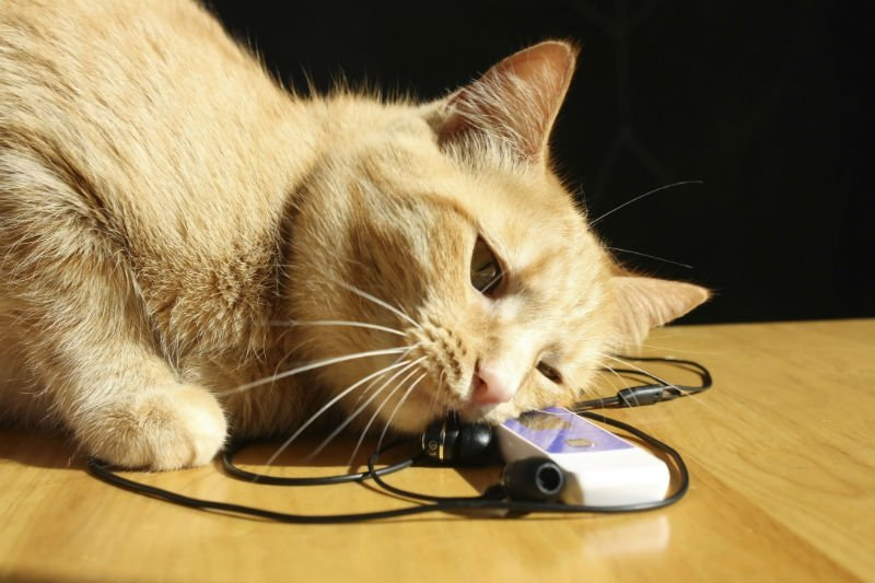 Research reveals cats' favourite music   Virgin
