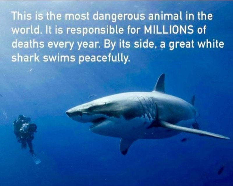 The most dangerous animal in the world | Virgin