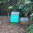 Waihi Beach Lodge bees