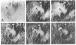 Image thumbnail for Anti-Myelin Basic Protein [MBP40]