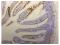 Image thumbnail for Anti-Omomyc [21-1-3]