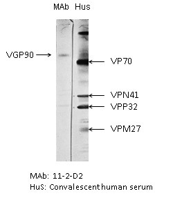 Image thumbnail for Anti-RSV G Glycoprotein [11-2-D2]