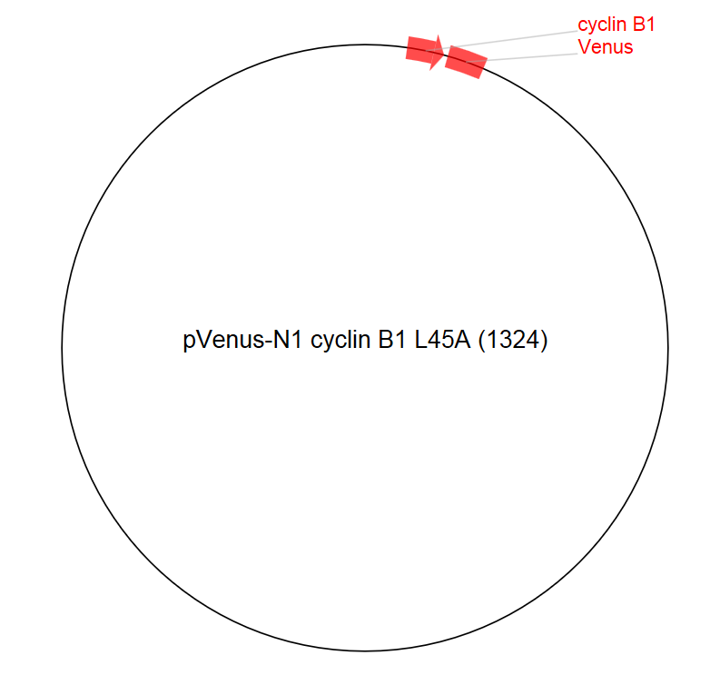 Image thumbnail for pVenus-N1 cyclin B1 L45A (1324) Vector
