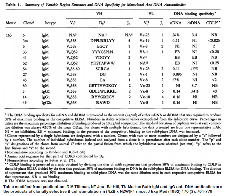 Image thumbnail for Anti-DNA [m165-3m] monoclonal antibody