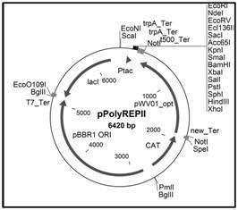 Image thumbnail for Shuttle Vector [pPolyREPII]