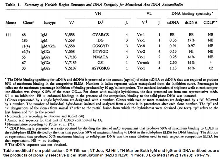 Image thumbnail for Anti-DNA [m111-c1] monoclonal antibody