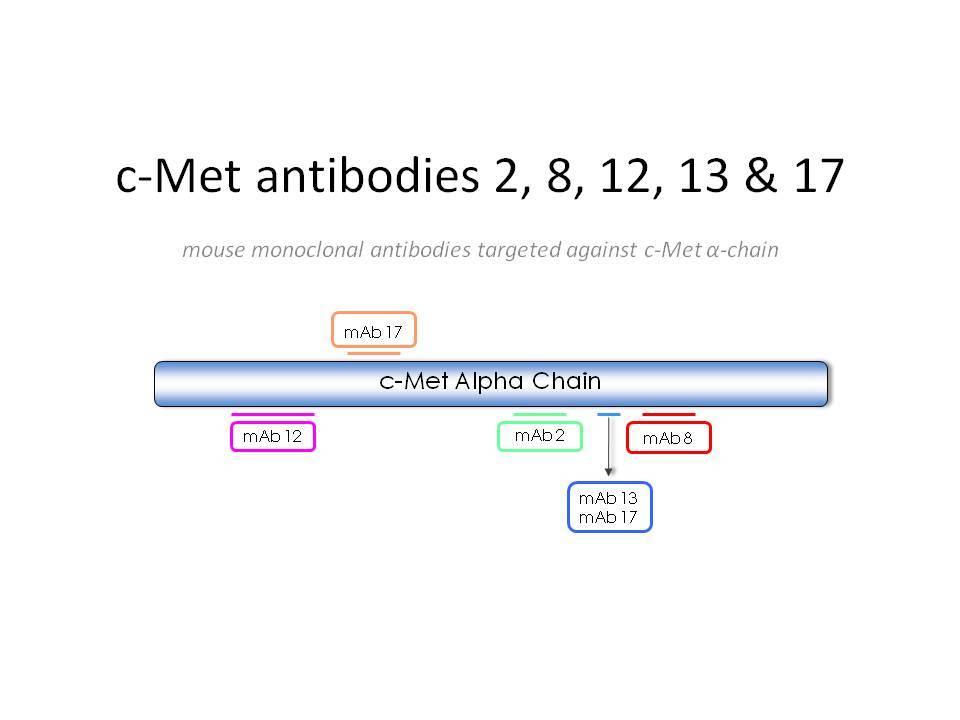 Image thumbnail for Anti-c-Met [8]