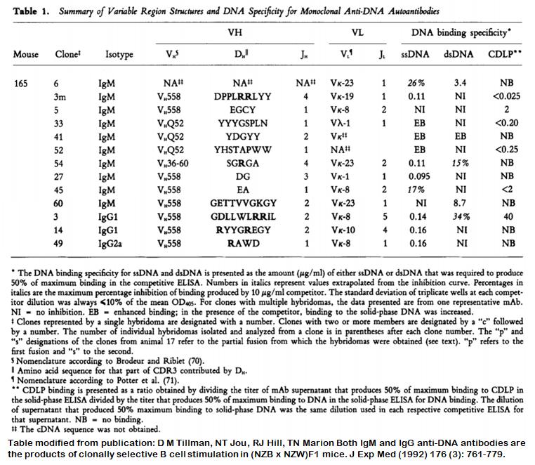 Image thumbnail for Anti-DNA [m165-14] monoclonal antibody