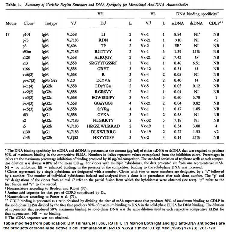 Image thumbnail for Anti-DNA [m17-p3] monoclonal antibody