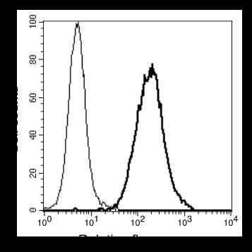 Image thumbnail for Anti-CEACAM21 [1E4] monoclonal antibody