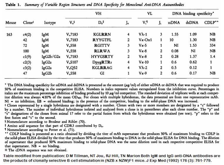 Image thumbnail for Anti-DNA [m163-42] monoclonal antibody