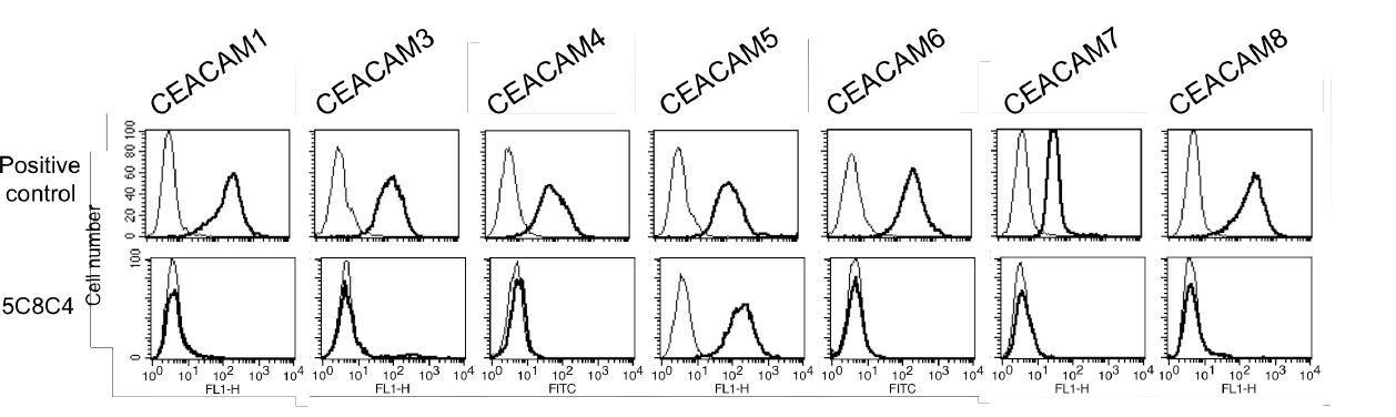 Image thumbnail for Anti-CEACAM5 (CD66e) [5C8C4] monoclonal antibody