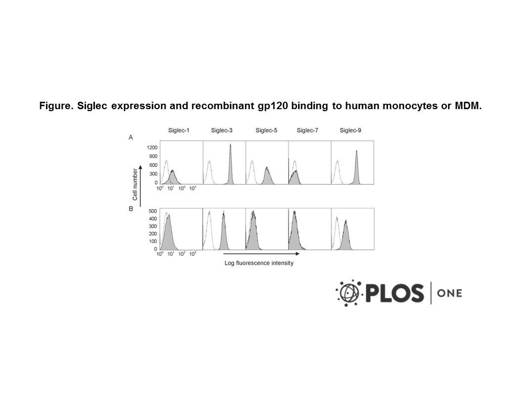 Image thumbnail for Anti-CD33 [6C5/2]