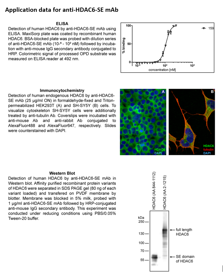 Image thumbnail for Anti-HDAC6-SE (159) mouse monoclonal antibody (SE domain-specific)