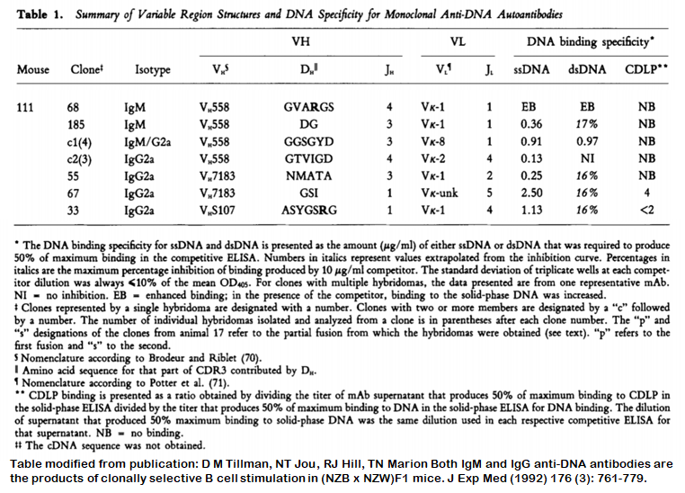 Image thumbnail for Anti-DNA [m111-33] monoclonal antibody
