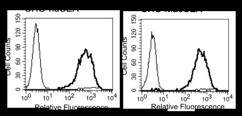 Image thumbnail for Anti-CEACAM5/6/8 (CD66e/c/b) [ivi4/27] monoclonal antibody