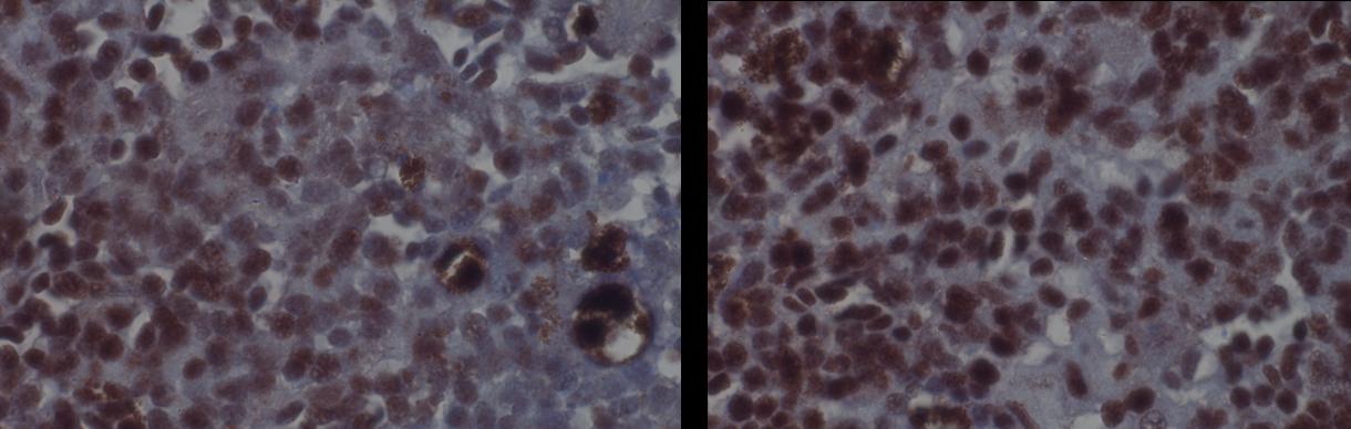Image thumbnail for Anti-CD3 [T1P1D4*C6]