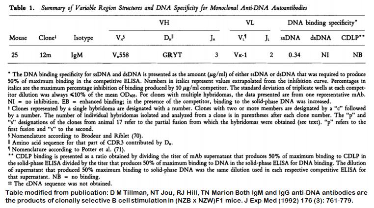 Image thumbnail for Anti-DNA [m25-12m] monoclonal antibody