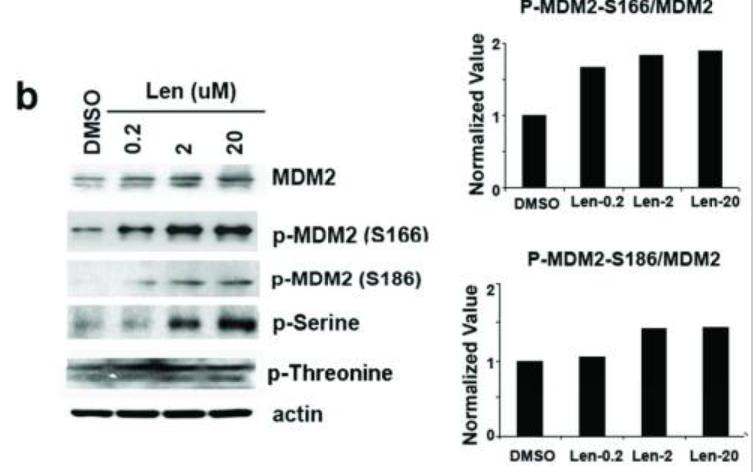Image thumbnail for Anti-Phospho MDM2 (Ser186) [2G2 2.2]