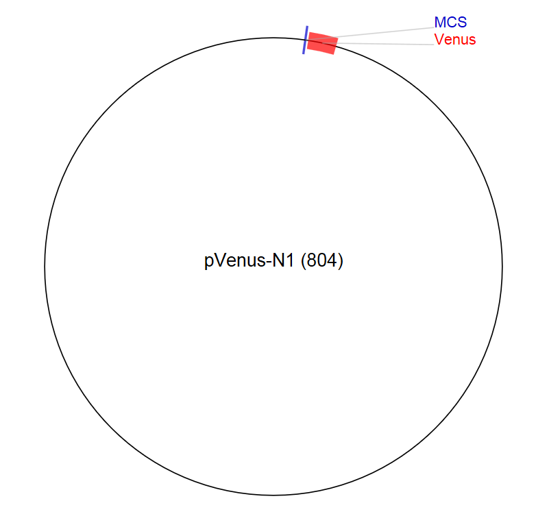 Image thumbnail for pVenus-N1 (804) Vector