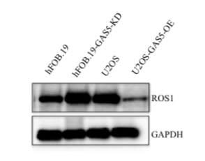 Image thumbnail for Anti-cROS [4-6G]