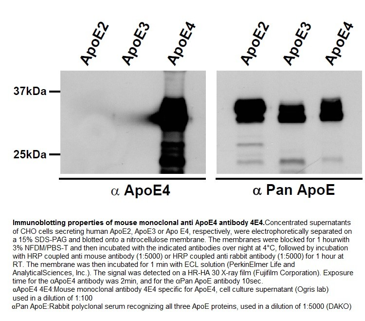 Image thumbnail for Anti-Apolipoprotein E4 [4E4]