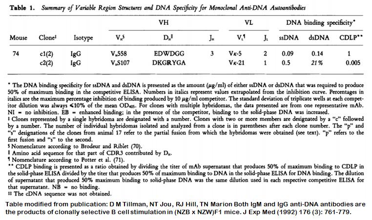 Image thumbnail for Anti-DNA [m74-c1] monoclonal antibody
