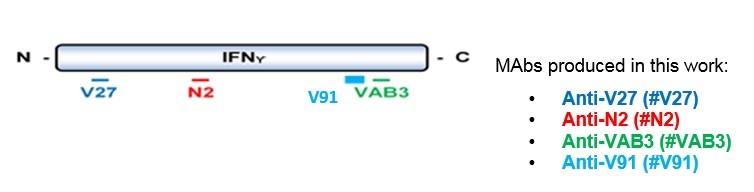 Image thumbnail for Anti-IFN-γ [N2P2D5*A10]